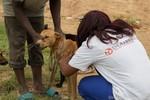 Harare, Zimbabwe - Mass Dog Vaccination
