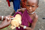 Africa - Dog Vaccination