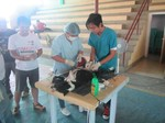 World Rabies Day 2015 - Sorsogon spay and neuter