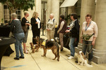 World Rabies Day 2016 - IFAH Europe WRD Event