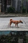 Philippines Payatas Mass Dog Vaccination